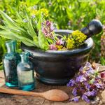 Купить семена пряных лекарственных растений