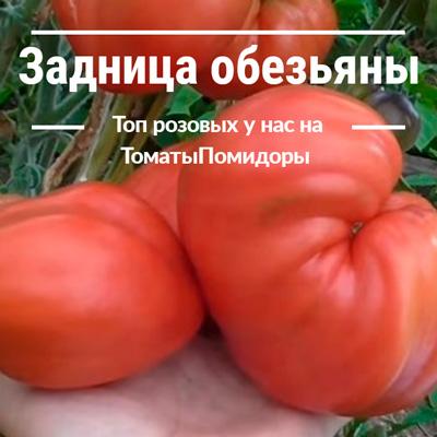 Томат Задница обезьяны - 4 место топ розовые томаты