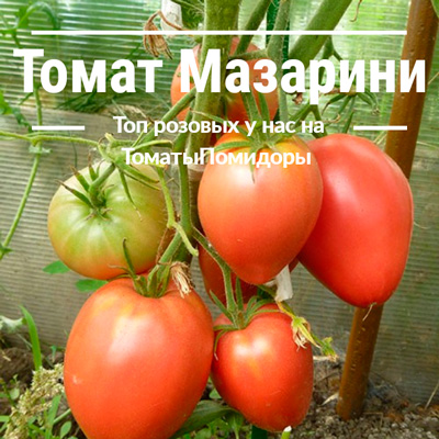 Томат Мазарини - 10 место топ розовые томаты