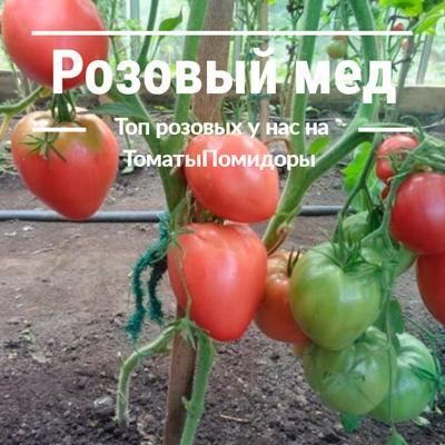 Томат Розовый мед - 6 место топ розовые томаты