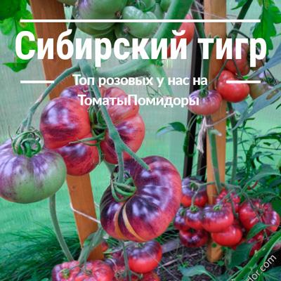 Томат Сибирский тигр - 4 место топ розовые томаты