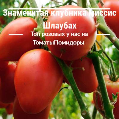 Томат Знаменитая клубника миссис Шлаубах - 2 место топ розовые томаты