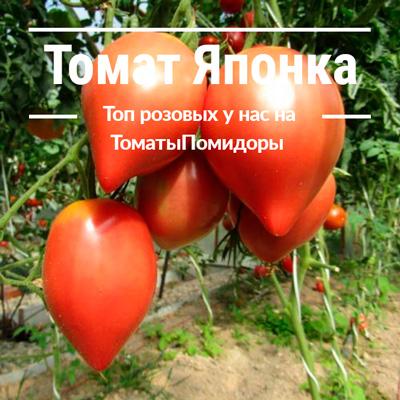 Томат Японка - 1 место топ розовые томаты