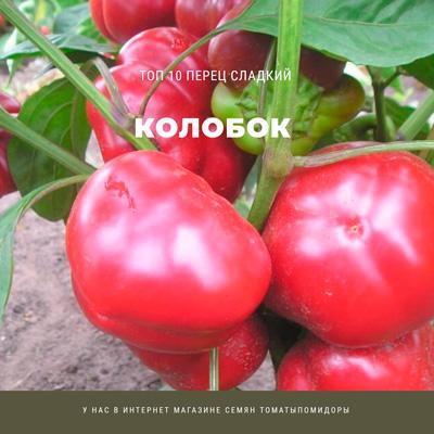 Перец Колобок - 7 место Топ лучших сладких перцев