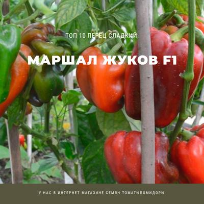 Перец Маршал Жуков - 9 место Топ лучших сладких перцев