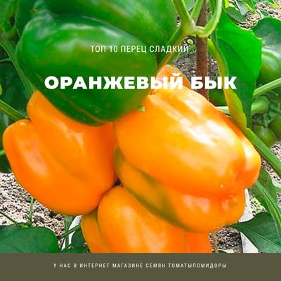 Перец Оранжевый бык - 8 место Топ лучших сладких перцев