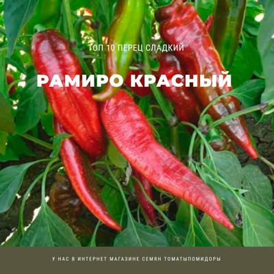 Перец Рамиро красный - 1 место Топ лучших сладких перцев