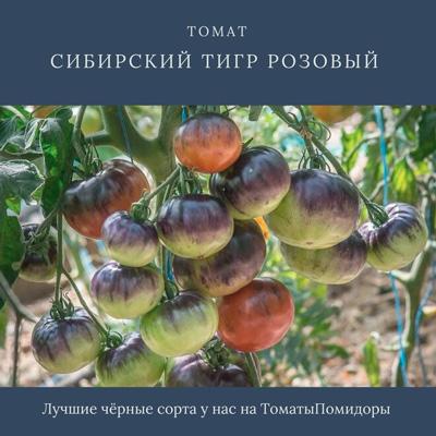 Томат Сибирский тигр розовый - 9 место топ черные томаты