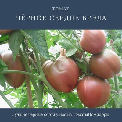 Томат Черное сердце Брэда - 5 место топ черные томаты
