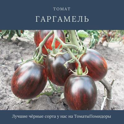 Томат Гаргамель - 2 место топ черные томаты