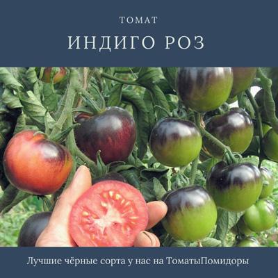 Томат Индиго Роз - 10 место топ черные томаты
