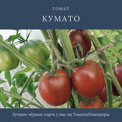 Томат Кумато - 7 место топ черные томаты
