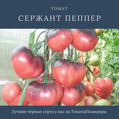 Томат Сержант Пеппер - 1 место топ черные томаты