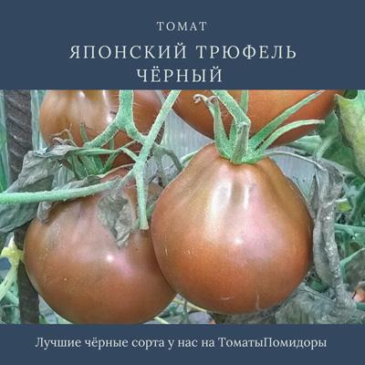 Томат Японский трюфель черный - 8 место топ черные томаты