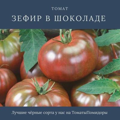 Томат Зефир в шоколаде - 6 место топ черные томаты