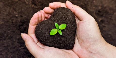 Купить удобрения, биопрепараты для растений, для компоста, выгребных ям