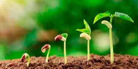 Препараты для рассады: проращивание семян, биопрепараты от болезней, стимуляторы роста