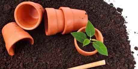 Купить грунт, почвоулучшители для рассады, комнатных растений, орхидей