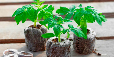 Купить горшки, пакеты, торфяные таблетки для рассады, кашпо для орхидей и комнатных цветов