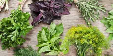 Семена зелени и пряностей: салат, петрушка, укроп и др.