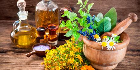 Купить семена лекарственных трав