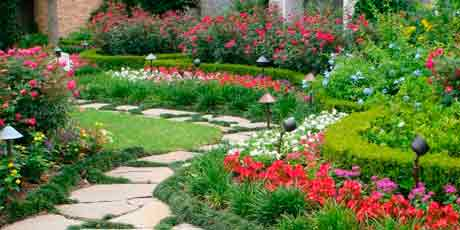Купить семена цветов: ампельные, вьющиеся, почвопокровные, злаковые