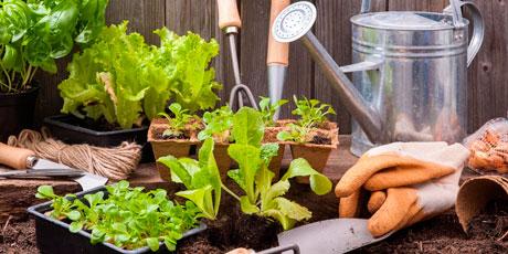 Агрохимия, садовый инвентарь, все для выращивания рассады