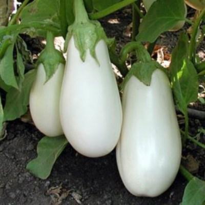 Купить Баклажан белый Вкус грибов