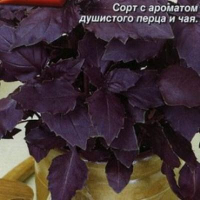 Купить Базилик Ереванский