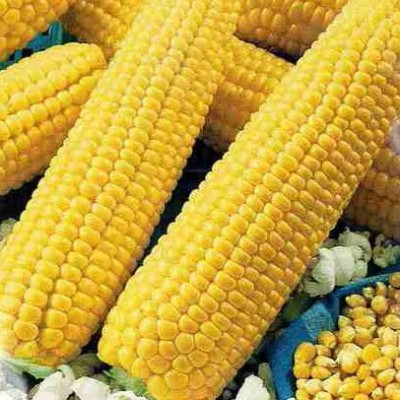Купить Кукуруза Лопай лопай попкорн