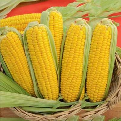 Купить Кукуруза Тройная сладость