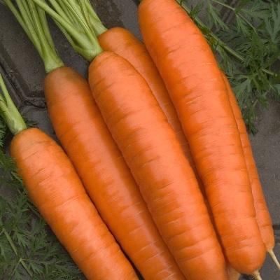 Купить Морковь Лосиноостровская 13 в гранулах