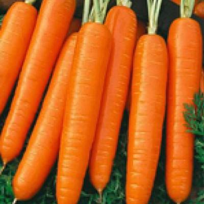 Купить Морковь Самсон в пакетах