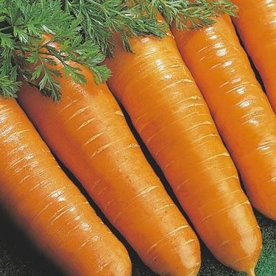 Купить Морковь Витаминная 6 на ленте