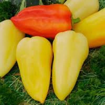 Купить Перец Белозерка (Лумина)