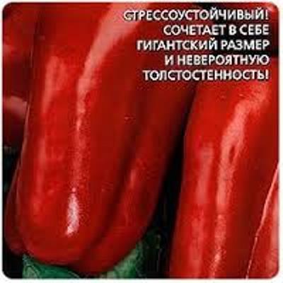 Купить Перец Уральский толстостенный