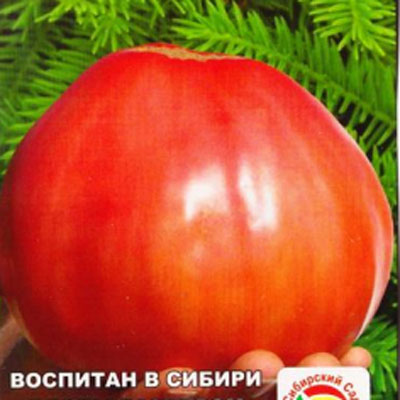 Купить Томат Микадо сибирико
