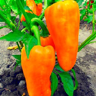 Купить Перец Какаду оранжевый