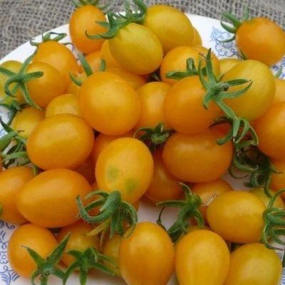 Купить Томат Ильди гроздевые