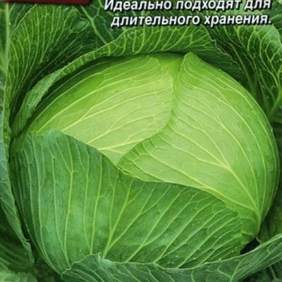 Купить капусту До весны