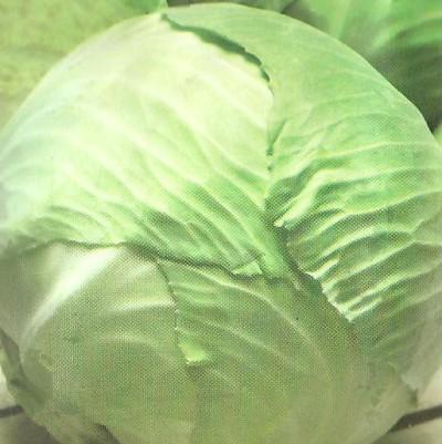 Купить капусту Номер первый Грибовский 147