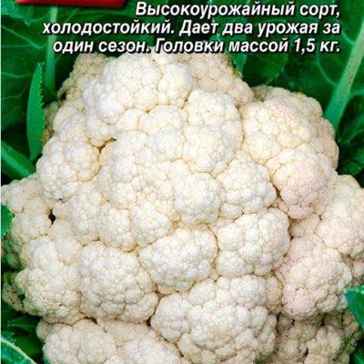 Купить капусту Елена Прекрасная