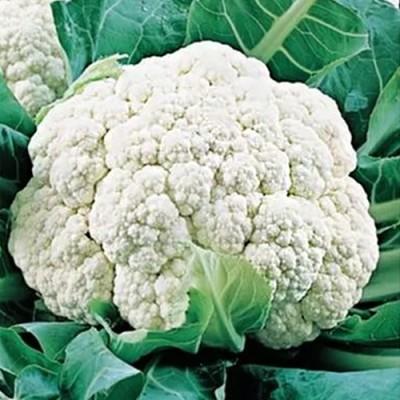 Купить капусту Сноуболл 123