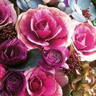 Купить Капуста Розовая цапля
