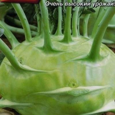 Купить капусту Белый гигант