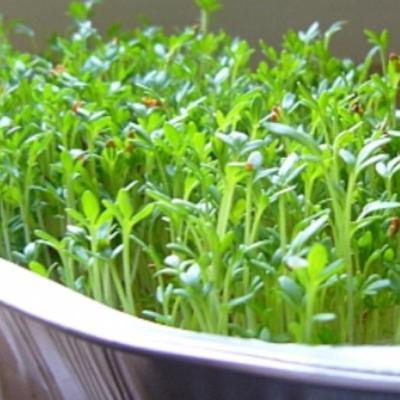 Купить Кресс-салат Весенний