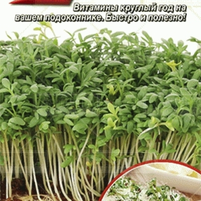 Купить Микрозелень Кресс-салат микс