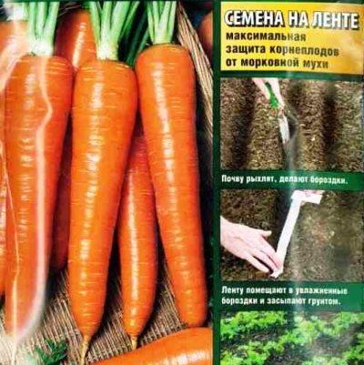 Купить Морковь Канада на ленте