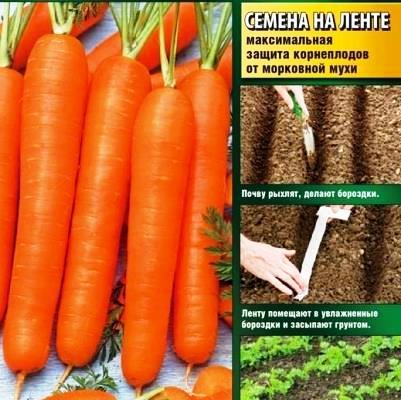 Купить Морковь Карамелька на ленте