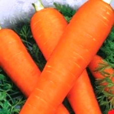 Купить Морковь красный великан на ленте